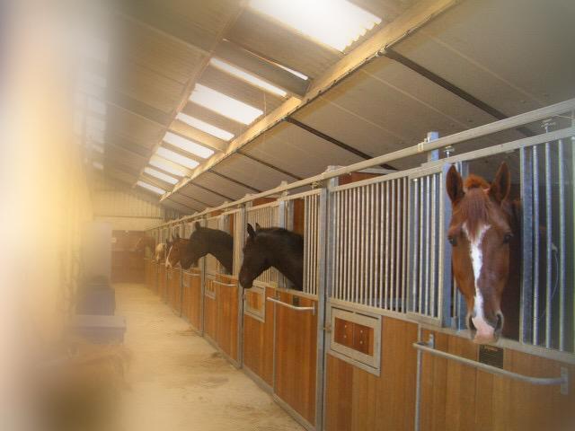 Paardenhouderij paardenstalling